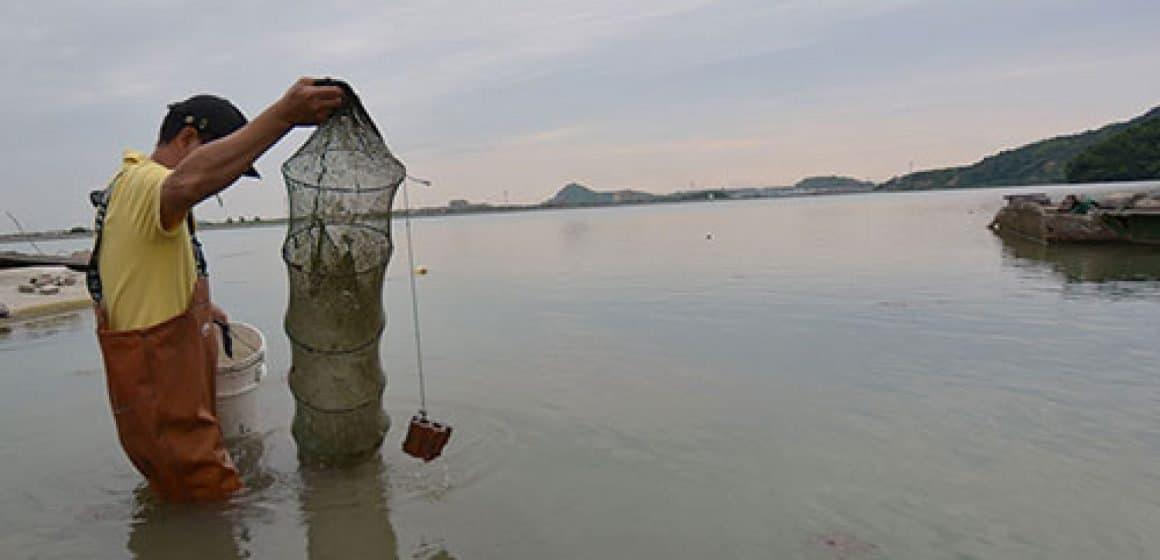Fishing-fresh-shrimps_thumb