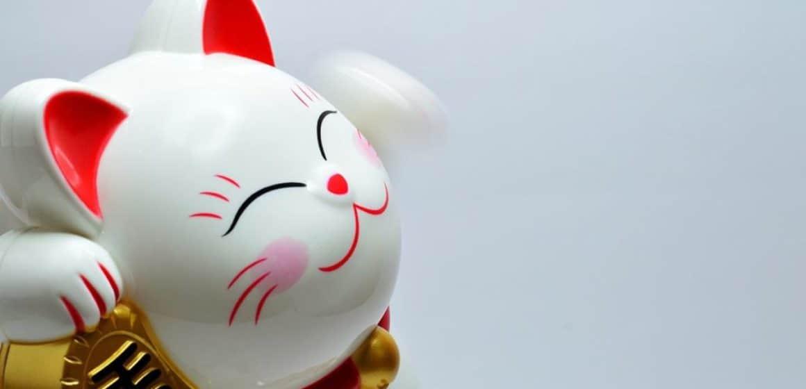 shanghai_chinese_cat