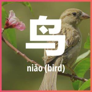 Chinese character: bird