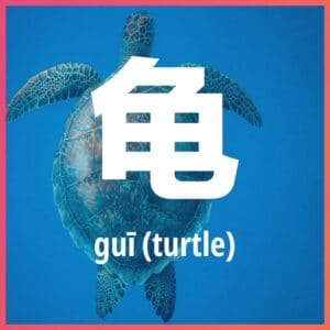 Chinese character: turtle