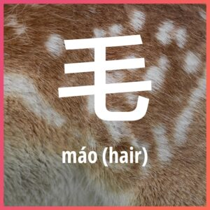 Chinese character: fur